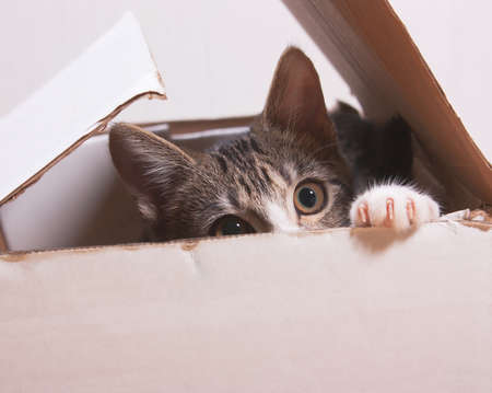 The cat is sitting in a box. Kitten hiding in box Standard-Bild