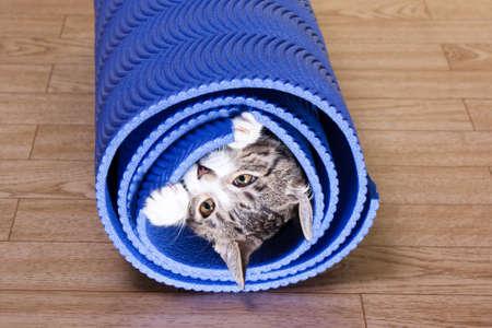 Kitten sitting on a yoga mat. Cat bites mat exercise