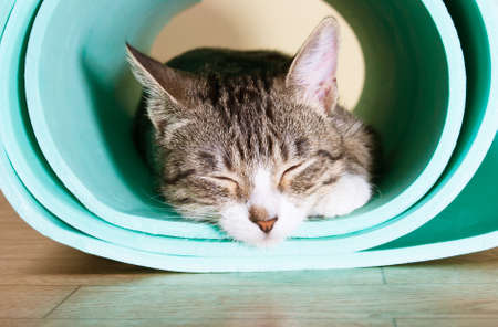 The cat sits on the mat for yoga. Kitten tired asleep after sports Banco de Imagens