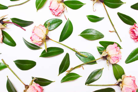 composition of green leaves and pink flowers, roses on a white background. Top view of a flat