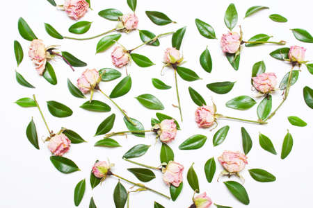 The pattern, composition of green leaves and pink flowers, roses on a white background. Top view Stock Photo