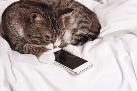 smart cat looks into the phone Stock Photo