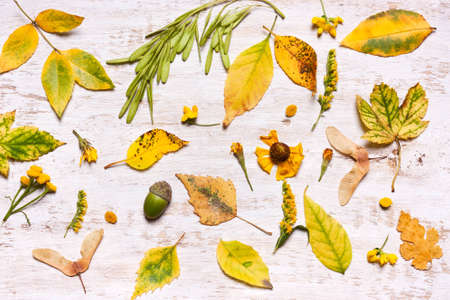 Yellow leaves on a wooden background. View from above, flat. Concept of Autumn