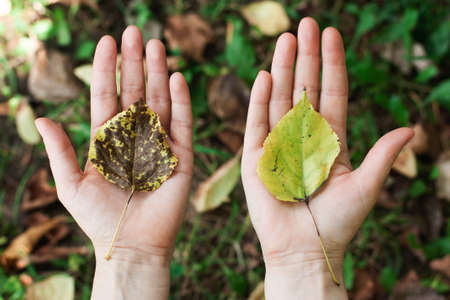 Concept of nature protection, environment, ecology, eco. leaf with a tree in the hands, palms.