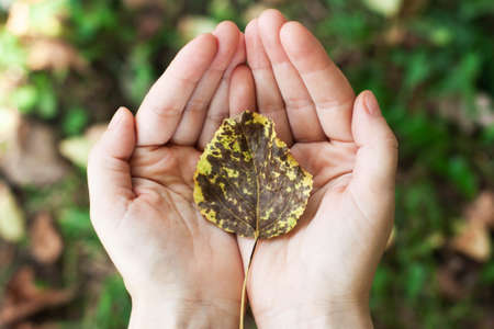 leaf with a tree in the hands, palms. Concept of nature protection, environment,
