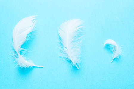 White feathers on blue background. Concept of purity. Art, creative. Tenderness, softness. Top view, flat Stock Photo