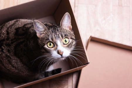 funny, cute cat sits in a cardboard box, peeks out Stock Photo