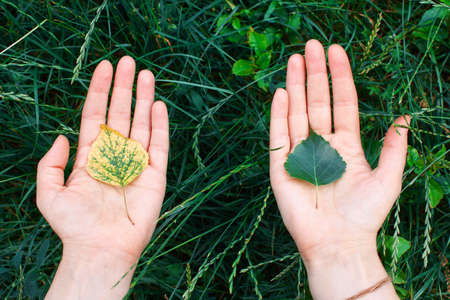 Yellow and green sprout in the palms of hands. The concept of conservation, ecology, environment Stock Photo