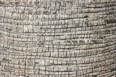 Palm tree bark texture. Natural minimalistic background.