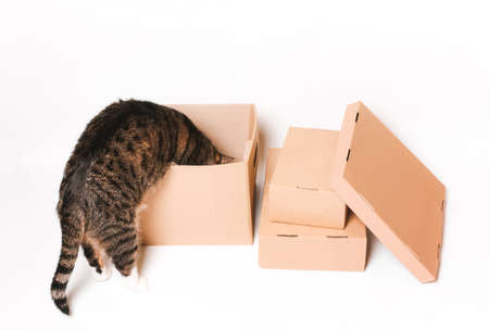 The cat looks in a cardboard box. Eco-friendly packaging. Transportation, transportation of things