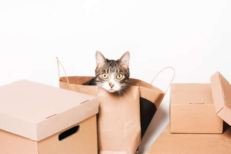 Cute cat looks out of the crafting package. Cardboard boxes. Eco-friendly packaging