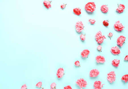 Pastel composition of coral, pink flowers, roses on a blue background. Natural festive letterhead. Soft focus