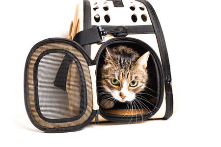 The cat sits in a carrying bag for transportation on a white background 版權商用圖片 - 150254847