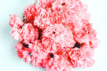 Pink, coral flower on a blue background. Soft focus
