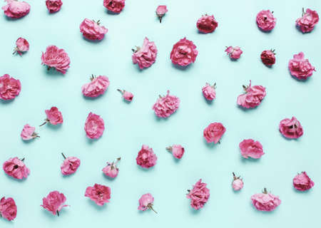 composition of coral, pink flowers, roses on a blue background. Natural festive letterhead. Soft focus