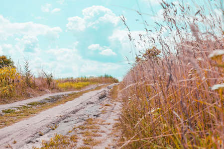 Road, trail in the countryside, in the field and blue bright sky, sunny summer day