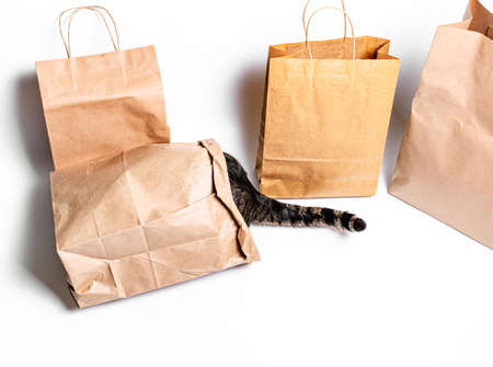 cat climbed into a craft bag on a white background. Shopping concept, environmental protection, zero waste Standard-Bild