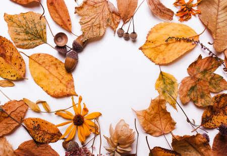 Yellow dry leaves, acorns, flowers, chestnut. Natural autumn background Standard-Bild