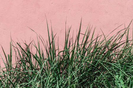 Green pastel long grass leaves on coral wall background