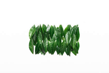 Green leaves on a white background. Minimalistic, eco, eco-friendly, creative concept. View from above Standard-Bild