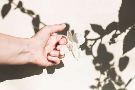 female hand with a dry white flower and a shadow from the leaves. Floral minimal design. The concept of fading, ending.