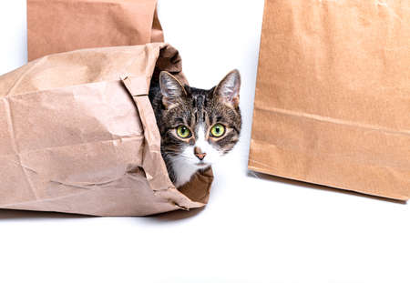 Cat sitting in a paper, craft bag, box. The concept of delivery, packaging, use of the environment, shopping