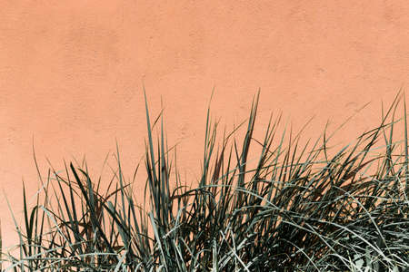 Pastel green long leaves of grass on an orange wall background