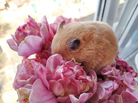 Hamster sleeps in a bouquet of flowers