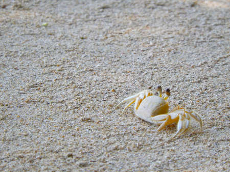 adapted: close-up of a crab at a tropical beach. decapod crustaceans