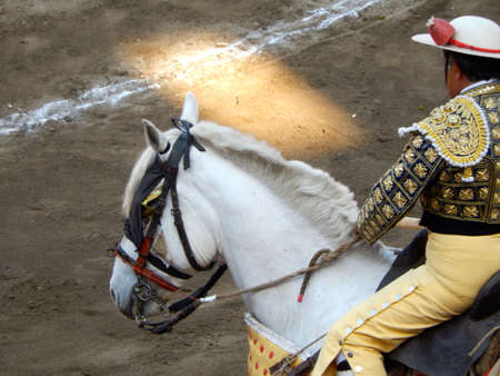 bullfight: Bullfighter in the ring. traditional picador. horse and picador