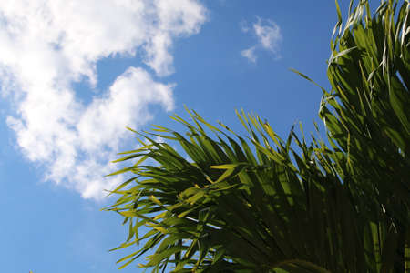 sky brunch: Palm brunch with a blue sky and clouds Stock Photo