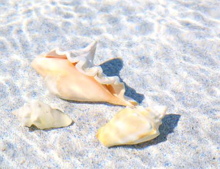 echinoderm: under water sea shells on a light grey background