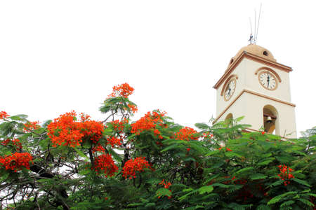 beautiful church in Santa Cruz de la Sierra city center, Bolivia. with blooming flowers