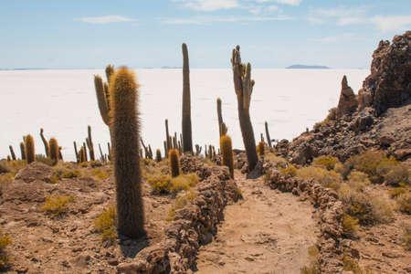 Cactus on Incahuasi island, Salar de Uyuni, Bolivia. On a summer day Imagens