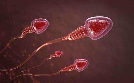Sperm cells swim to the egg
