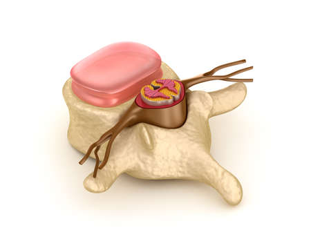 Spinal segment with a disk photo