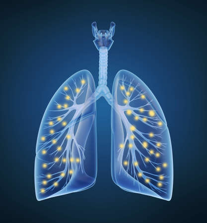 pulmonary artery: Human lungs and bronchi and oxygen in x-ray view Stock Photo