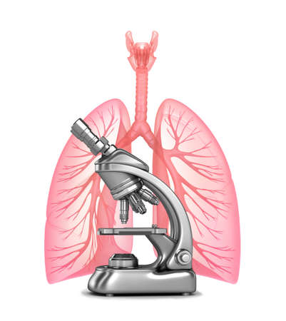 Research of human lungs with and bronchi