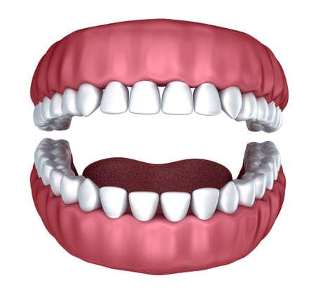 dentin: 3d open denture isolated on white