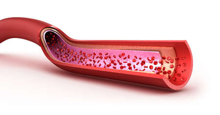 vasos sanguineos: Vasos sanguíneos en lonchas macro con eritrocitos. Aislados en blanco