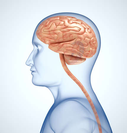 lobe: The brain in the transparent head on the lightblue background
