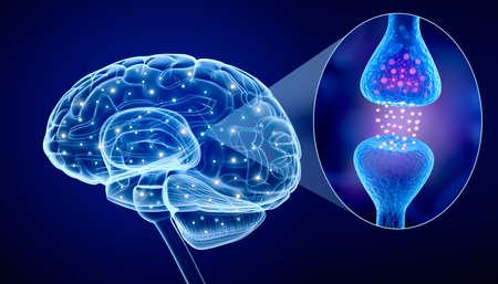 cerebro humano: Cerebro humano y receptor activo