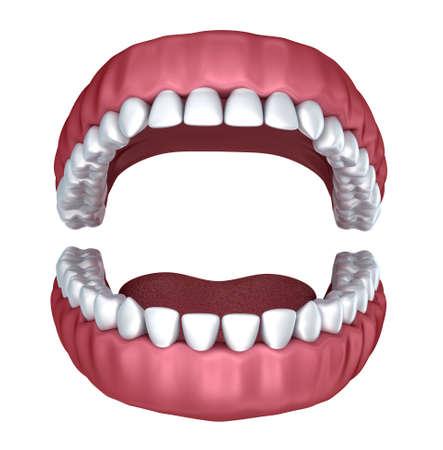3d open denture isolated on white