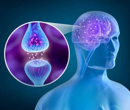 cellule nervose: Cervello umano e recettore attivo Archivio Fotografico