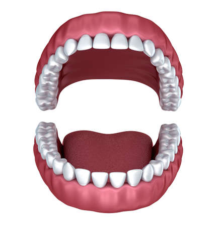 yawn: Opened denture isolated on white. 3D rendering Stock Photo