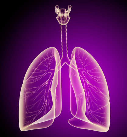 exhale: Human lungs and bronchi in x-ray view