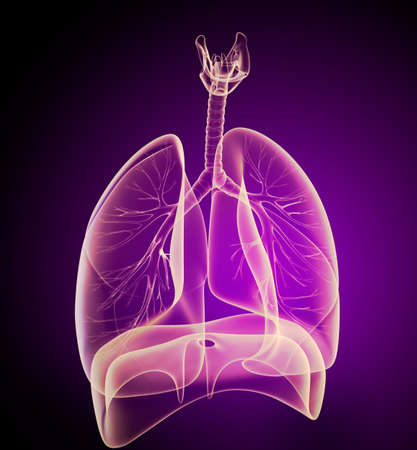 bronchi: Human lungs and bronchi in x-ray view