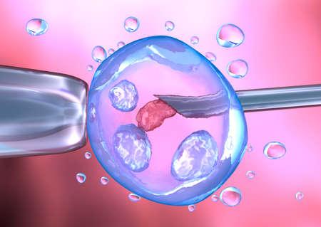 proceso de la inseminación artificial Foto de archivo