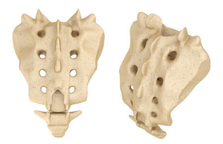 Sacrum: Medically accurate 3D illustration