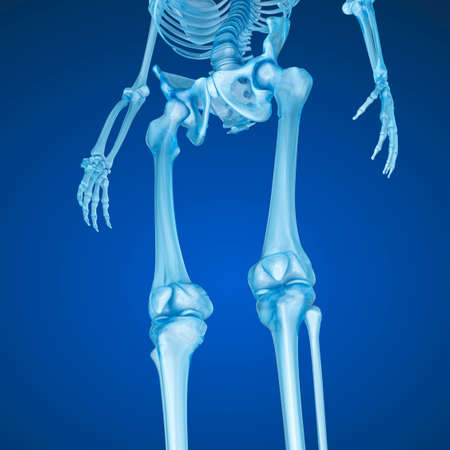 patella: Human skeleton: Knee joint. Medically accurate 3D illustration Stock Photo